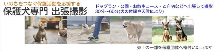保護犬・出張・撮影